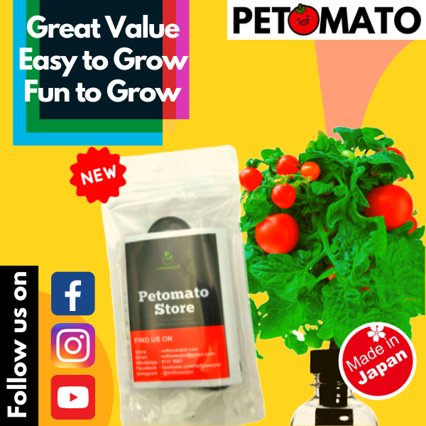 ✿READY STOCK✿ Petomato (Cherry Tomatoes) [hydroponics grow/starter kit system • water bottle fruit/vegetable indoor garden • ✿ALL-IN-ONE✿ seeds + fertilizer/nutrients provided]