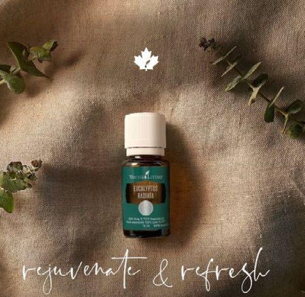 Buy Young Living Eucalyptus Radiata Essential Oil 15ml Singapore