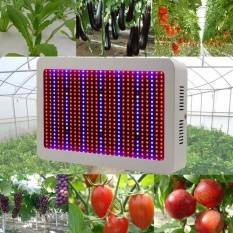 Best Price 600W Indoor White 60 Led Grow Light For Growing Plants Vegs Plant Light Intl