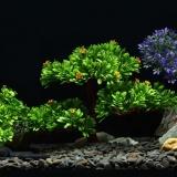 Cheap Artificial Tree Plant Grass Figurines Miniatures Aquarium Fish Tank Landscape Size 27 X 17 0Cm Intl