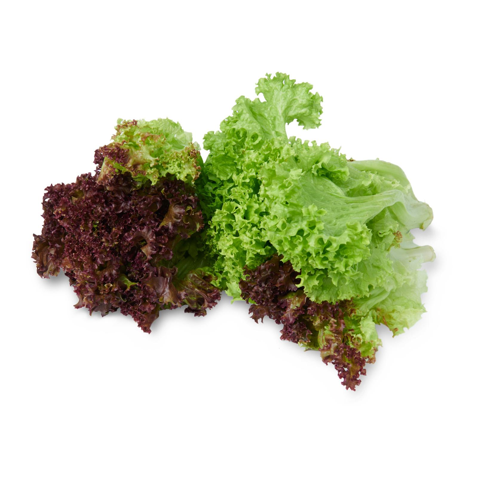 Givvo Green And Red Coral Lettuce By Redmart.