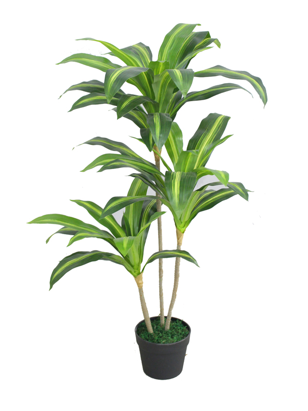 Artificial plant - Dracaena fragrans 3 stem 100cm Silk plants