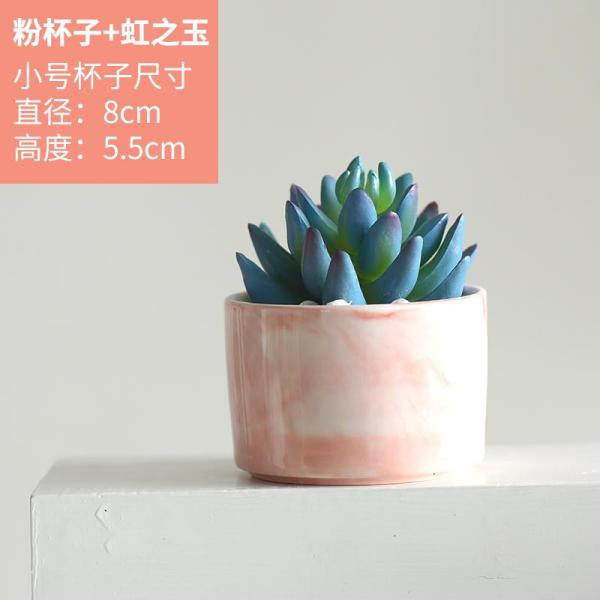 Northern Europe Artificial Succulent Pant Decoration INS Green Vegetation CACTUS Potted Plant Living Room Snnei Desktop Small Ornaments Artificial Flowers