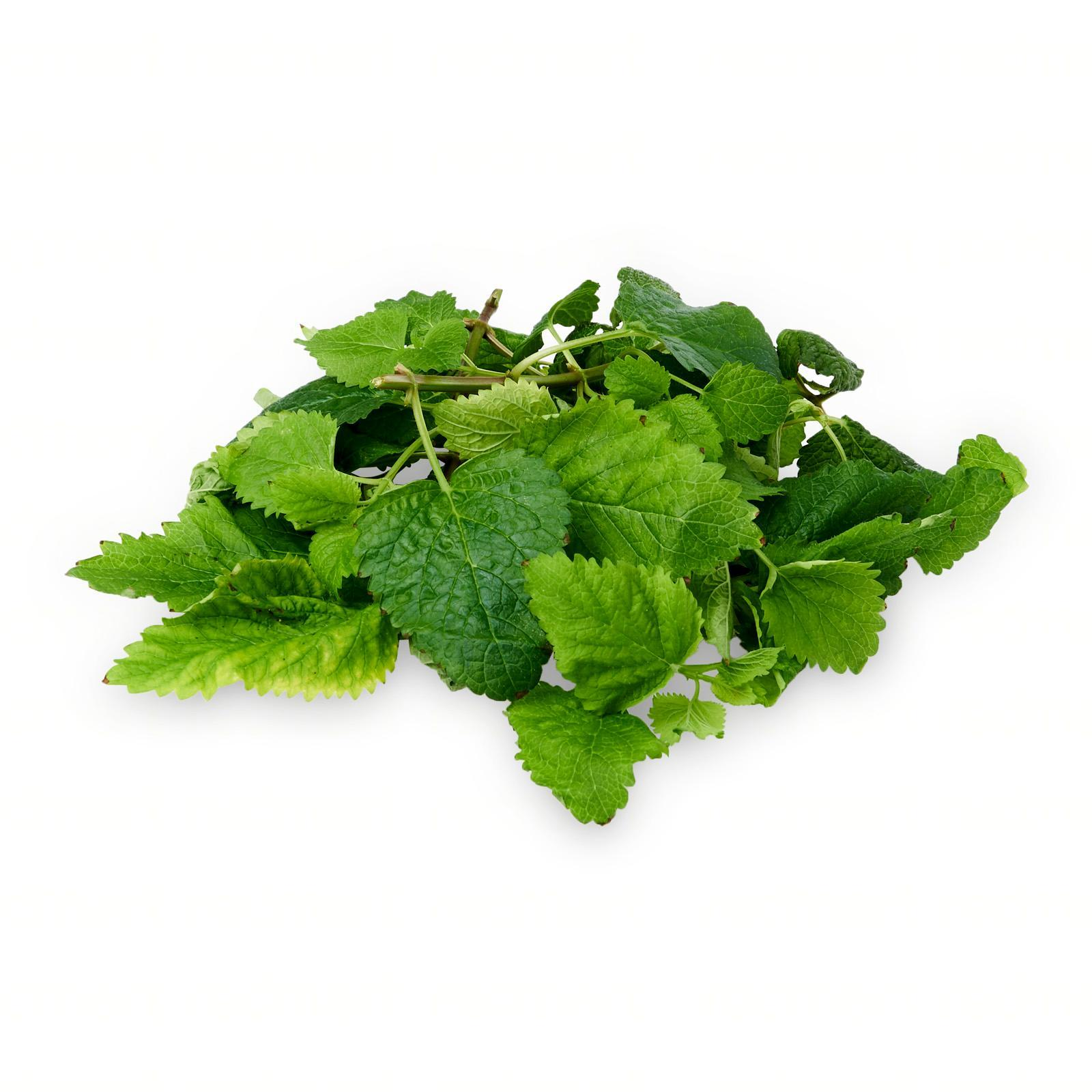 The Little Red Farm Lemon Balm
