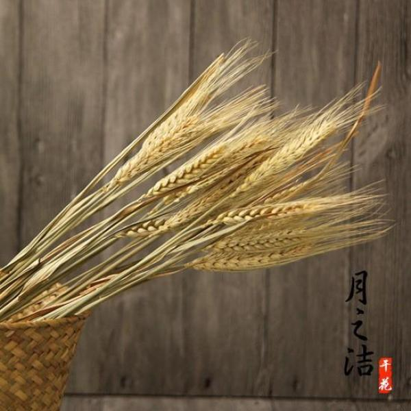 [SG Seller]25pcs Natural Wheat Dried Flowers Indoor Decoration Shooting Props