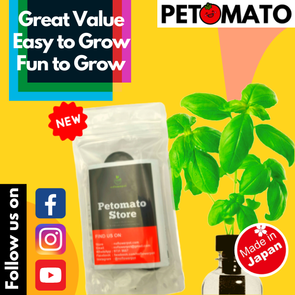 【Free Shipping + Super Deal + Special Offer】Petomato - Sweet Basil - Made in Japan Hydroponic Soiless Plant Kit System Fun Education Science Starter Grow Kit for Indoor Outdoor Garden (comes with free seed and plant food nutrient)