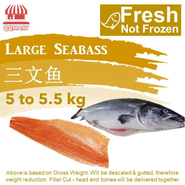 Fresh Whole Norwegian Salmon 5 To 5.5kg (fillet Cut) By Qqmart.