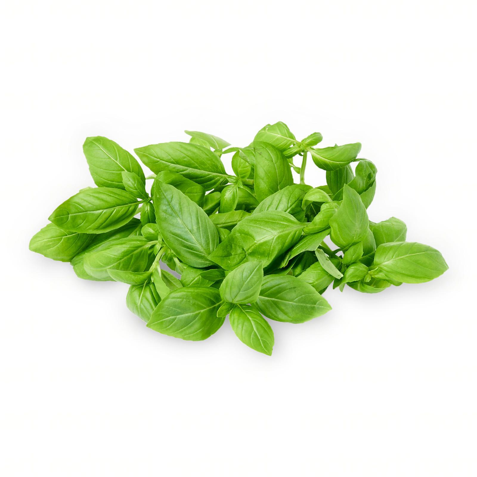 The Little Red Farm Sweet Italian Basil