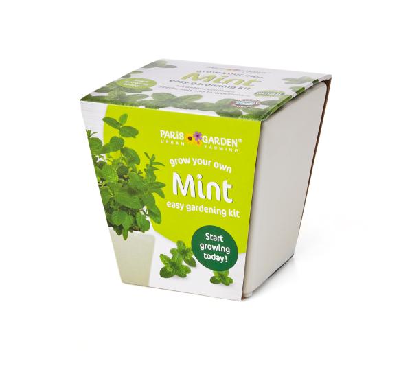 Ceramic Pot: Mint